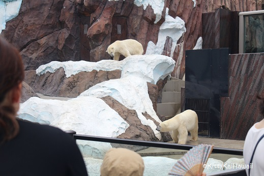 polor bear.jpg