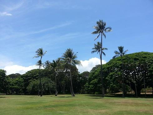 tree8-9.jpg